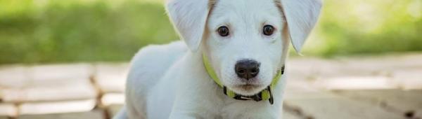 Cucciolo (CC)